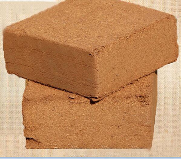 椰糠土圖片